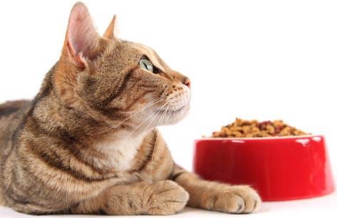 hrana pisici