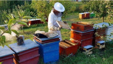 Cum a construit o familie o afacere apicola profitabila
