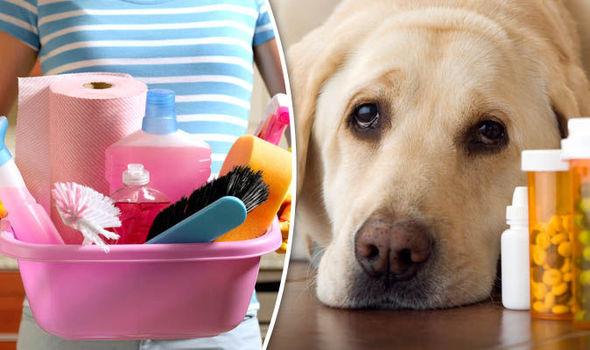 Cabinet Veterinar Valu: Cele mai mari pericole pe care animalele de companie le intampina in casa