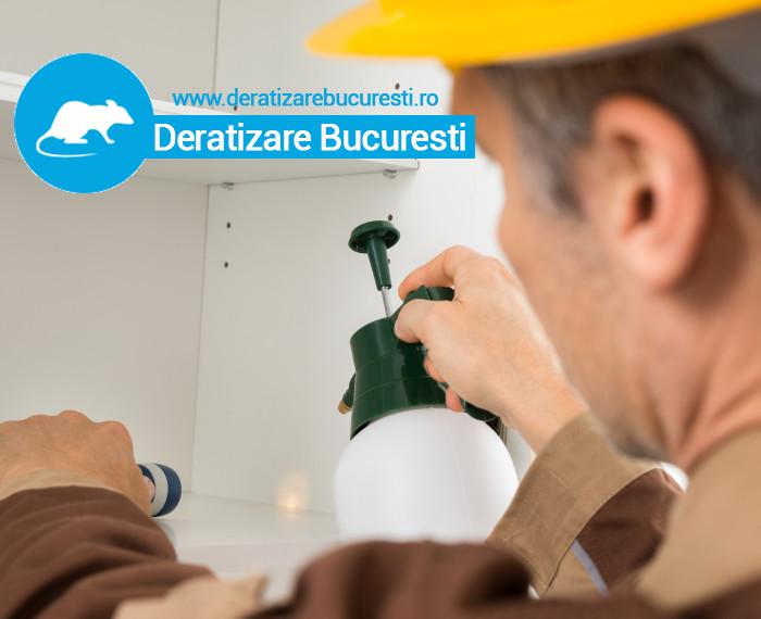Deratizare Bucuresti- De este important sa efectuam la timp lucrarile profesionale de dezinsectie?