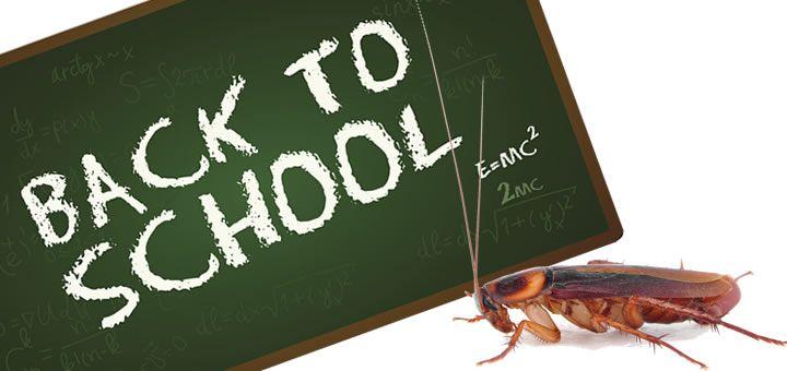 servicii ddd scoli
